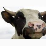 Сыворотка сухая молочная купить