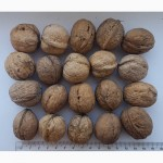 Продаємо волоський (грецький) горіх. Кругляк