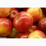 Продам яблоки оптом (Польша)