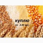 Закупаю пшеницу фуражную