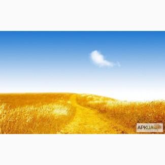 Закупка пшеницы только оптом.Самовывоз