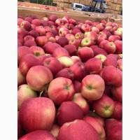 Купим яблука ДОРОГО, від 10т
