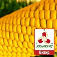2017 рік Насіння кукурудзи Візир Маїс ФАО 350 кукуруза Маис