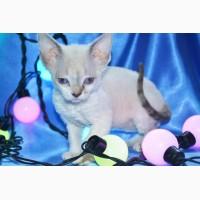 Продам самых милых котят