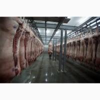Свинина | Полутуши | Элементы | Субпродукты оптом от Мясокомбината