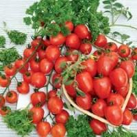Продам оптом помидоры