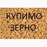Компанія на постійній основі проводить закупівлю зернових культур та інші