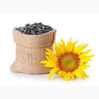Семена сортов подсолнечника