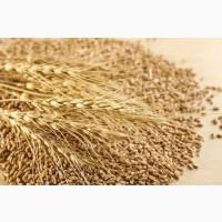 Постоянно закупаю зерноотходы зерновые, масличные, бобовые