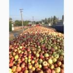 Предприятие закупает яблоко на промпереработку по всей Украине