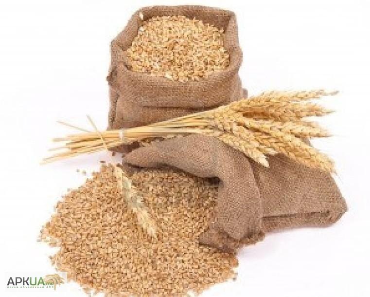 Продам с элеватора пшеницу погрузчики и конвейеры