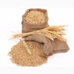 К У П Л Ю пшеницу оптом