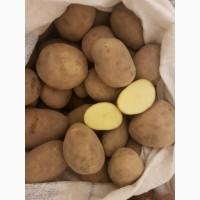 Продам картофель. Оптом