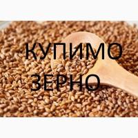Закуповуємо пшеницю 2 кл-3
