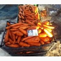 Продам морковь опт