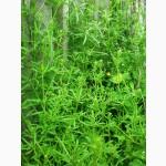 Продам гербицид Подмарин (аналог Прима) на зерновые колосовые, кукурузу