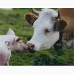 Продам корма для всех видов животных