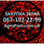Принимаем зерно в портах Украины. Любая форма расчёта