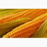 Куплю кукурузу оптом