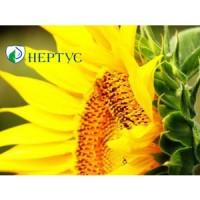 НС Фантазия(А-Е) высокоурожайный, высокоолийный гибрид подсолнечника семена