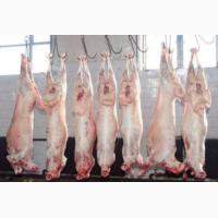 Продам вкуснейшую баранину (а также мясо молочных ягнят)