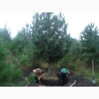 Требуются молодые люди для работы в сфере озеленения и ландшафтного дизайна