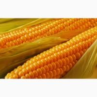 Куплю кукурузу Бердянск