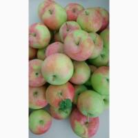 Яблоко с сада и хранилища урожай 2019