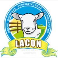 Продам племенных овец французкой молочной породы ЛАКОН (lacaune)