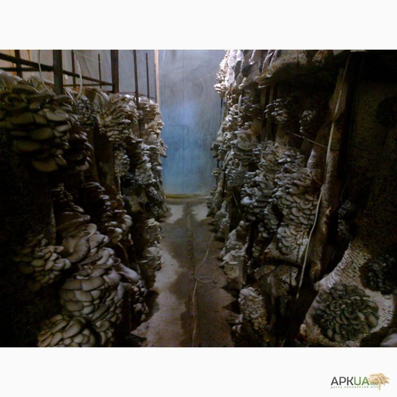 грибные блоки купить