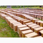 Продам пчелопакеты Карпатской пчелы с доставкой по Украине
