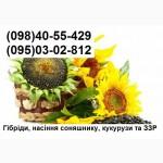 Продам насіння соняшника Бріо, Неома, Рокі, Мегасан (урожай 2015р)
