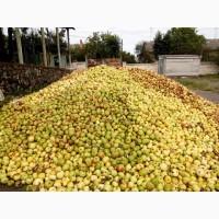 Куплю яблоко на проипереработку от населения, владельцев