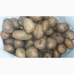 Продам картошку крупную и среднюю