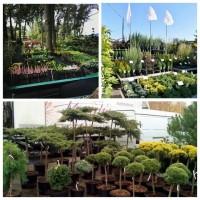Индивидуальный подбор и закупка любых видов растений