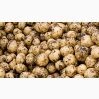 Продам картошку на корм. Мелкая картошка в наличии