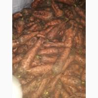 Распродажа, Морковь, Производитель, в связи с закрытием хранилища