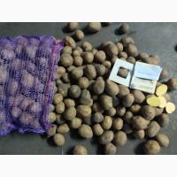 Картофель товарный. Картофель семенной опт