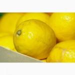 Лимоны оптом Турция