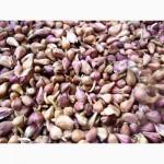 Семена чеснока (воздушка) на посадку