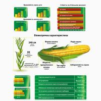 2017 рік! Насіння кукурудзи Штандарт (Маїс) ФАО 400 кукуруза Маис
