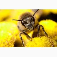 Куплю мед оптом дорого! (без антибиотика)