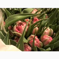 Продам тюльпаны на 14 февраля и 8 марта. Опт. Голландия