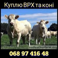 Куплю ВРХ, бики та коні. У Вінницькій, Черкаській, Дніпропетровській та сусідніх областях