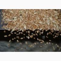 Очистка зерновых, калибровка, фотосепаратор, сортекс