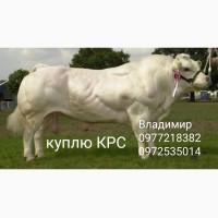 Куплю велику рогату худобу на территории запорожской области