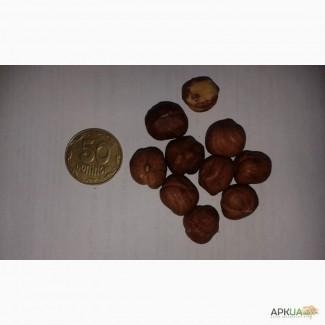 Фундук 13-15, 15+, сырой и жаренный