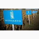 Гибрид кукурузы Монсанто украинской селекции от ООО Компания Райз