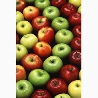 Покупаем сортовое яблоко от 10 тонн. На переработку не берем