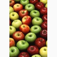 На постоянной основе покупаем яблоко оптом Подбор не покупаем